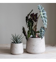 Set two cement pots - tapered
