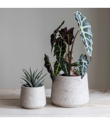 Set two cement pots with tapered sides