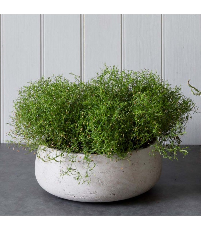 small low cement bowl perfect as indoor plant pots