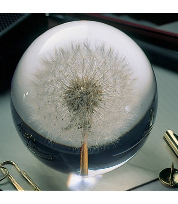 Dandelion Botanical paper weights